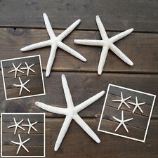 12Pcs 5-10CM Sea Star Natural White Starfish Finger Great Wedding Decoration