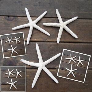 12Pcs 5-10CM Sea Star Natural White Starfish Finger Great Wedding Decoration