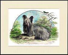 SKYE TERRIER DOGS LOVELY DOG PRINT IMAGE MOUNTED READY TO FRAME