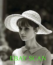AUDREY HEPBURN 8x10 Lab Photo 1960's Elegant Beauty Hat