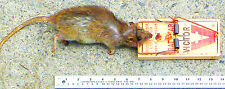 """1 LARGE Wood RAT TRAP 7"""" SnaP KILL Rats rodents gopher VICTOR 19025P M201"""