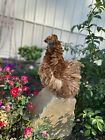 6 NPIP - Silkie And Frizzle NPIP hatching eggs