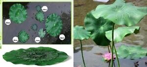 FLOATING ARTIFICIAL GREEN LILY PAD, POND WATER FEATURE, FROGS PAD, 7 sizes avail