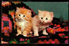 1960 vintage chrome blue eyed sisters on crocheted blanket kitten cat postcard