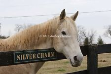 8x10 Color photo of Silver Charm @ Old Friends