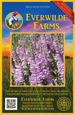 400 Obedient Plant Wildflower Seeds - Everwilde Farms Mylar Seed Packet