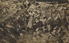 taru plantation samoa - a.j.t. 63