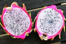 Delight, Pink Flesh Dragon Fruit 2 new Cuttings 8