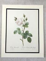 1956 Vintage Rosa Impronte Francese Botanico Floreale Fiori Muschio Rose Muscosa
