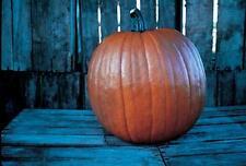 Pumpkin Howden Vegetable Seeds