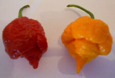 Trinidad SCORPION MORUGA Mix Red + Yellow 20 semi con 2.000.000 faccia