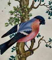1794 Edward Donovan - BULLFINCH - exquisite hand coloured copper engraving