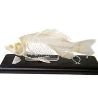 Fish Educational Specimen