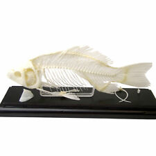 Fish Educational Specimen