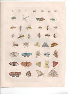 1866 Hand Coloured Engraving  Insects, Buffon Natural History