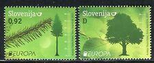 SLOVENIA 2011 EUROPA/ORGANIZATION/FOREST/NATURE/PLANTS/WOOD/TREE/LEAF