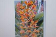 "10 Samen Agastache  ""Navajo Sunset "",Agastache aurantiaca, # 125"