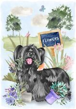 "Skye Terrier Dog (4"" x 6"") Blank Card / Notelet Design By Starprint"