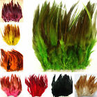 beautiful rare 50pcs/100pcs rooster tail feathers 10-15cm / 4-6inch