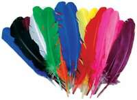Turkey Quill Feathers 25/Pkg Assorted 096709064856