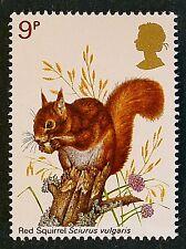 Red Squirrel - Sciurus vulgaris - on 1977 Stamp - Unmounted Mint