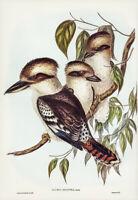JOHN GOULD GREAT BROWN KINGFISHER (KOOKABURRA) VINTAGE BIRD ART PRINT POSTER