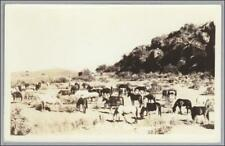 RPPC Horses Remuda 1930s Lazy X Ranch Herd Real Photo Postcard