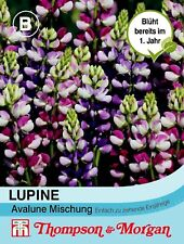 Lupin 'Avalune' - Hartwegii, once Blooming, Fragrant, Approx. 20 Seeds 61831