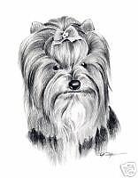 BIEWER Pencil Drawing 8 x 10 ART Print Dog Print Signed DJR
