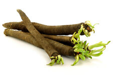 1g (~80) black salsify seeds SCORZONERA HISPANICA delicious oyster-like flavor