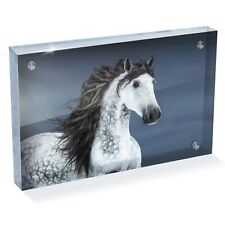"""Grey Andalusian Horse Photo Block 6 x 4"""" - Desk Art Office Gift #12556"""