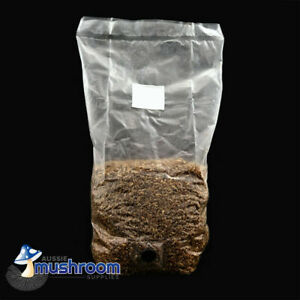 Pre Sterilised Grain Spawn Bag With Injection Port For Mushroom Cultivation