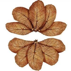 "15+ Dried Almond Leaves Catappa, 14cm-18cm for Betta Fish, Shrimp, Aquarium ""A"""