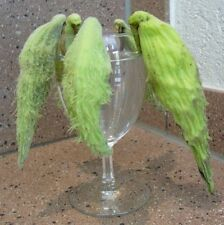 """. die Papageienpflanze """"Asclepias syriaca"""" - die Früchte sehen aus wie Vögel !"""
