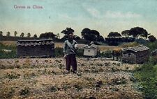 Graves in China Postcard -  Not a Reproduction