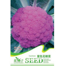 FD1284 Purple Cauliflower Seed Broccoli Seed Green Vegetable ~1 Pack 20 Seeds~