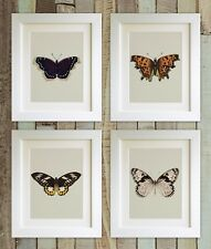 "SET OF 4 Butterfly Prints, 5""x7"" UNFRAMED Bedroom, Lounge Decor, Picture Gift"