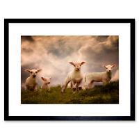 Lambs Sheep Farm Animal Cloud Art Picture Framed Wall Art Print