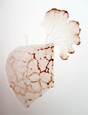 Brown Slime Mold Sclerotium - Sclérote de blob marron (Philippines)