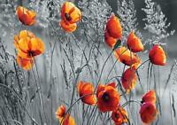 Vlies Fototapete Tapete Poster   F12613 Mohnblumen Feld Wiese Blume Mohn Blumen