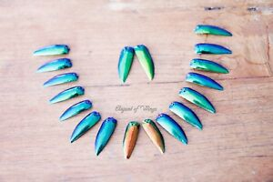 1000 Drilled Elytra Jewel Beetle Wings Embroidery Dress Making Embellishment