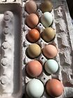12+ Colorful Barnyard Mix Hatching Eggs - Easter Egger, Olive Egger, Maran, More