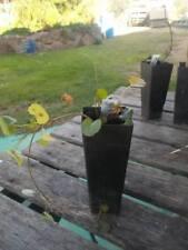 1 x Gotu Kola plant tube size: Centella Asiatic syn. Hydrocolyte asiatica F.