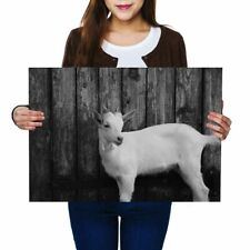 A2 - Adorable White Goat Farmer Animals Poster 59.4X42cm280gsm(bw) #41435