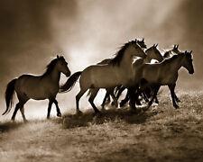 Wild Horses Art Poster Print by Lisa Dearing, 20x16