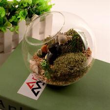 Globe Ball Glass Flower Vase Terrarium Bottle Desktop Micro Landscape Container