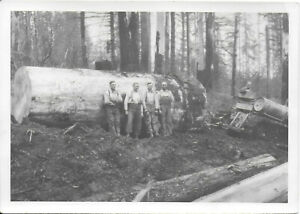 """2 Diff 5"""" x 7 BW Photos of Logging Company Workers & Equipment 1920-30s"""