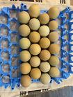 Olive Egger Hatching Eggs 12+1