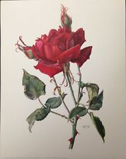 Charles Mallerin Red Rose By Claus Caspari