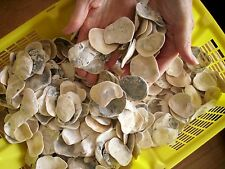 1.9 KG. Koi ready Oyster Shell Smalls Pond Filter media Natural organic CaCo3